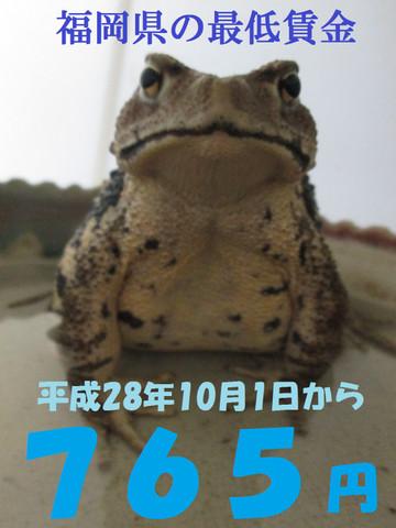 Gekoe3